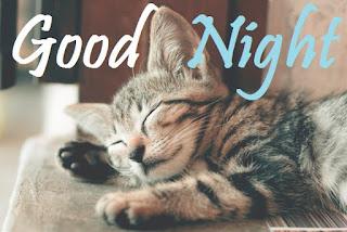 good night pic cute baby cat