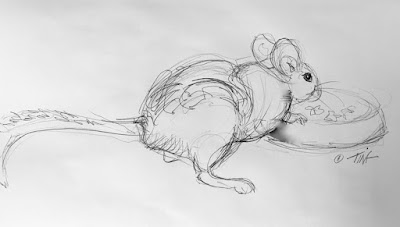 White-throated Woodrat, ink pen sketch ©2020 Tina M.Welter