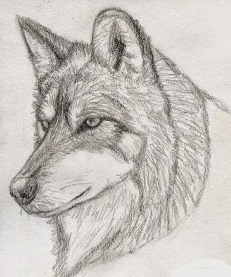 صور رسم ذئب