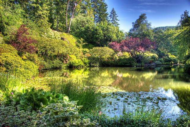 Tuin met vijver en struiken hd wallpapers for Tuin en vijver