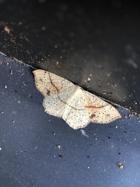Moths, Teammoth, Mothsmatter