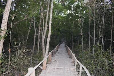 Karamjol walking path in the Sundarbans
