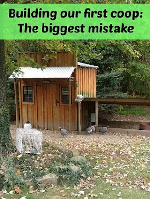 Chicken coop building mistakes.