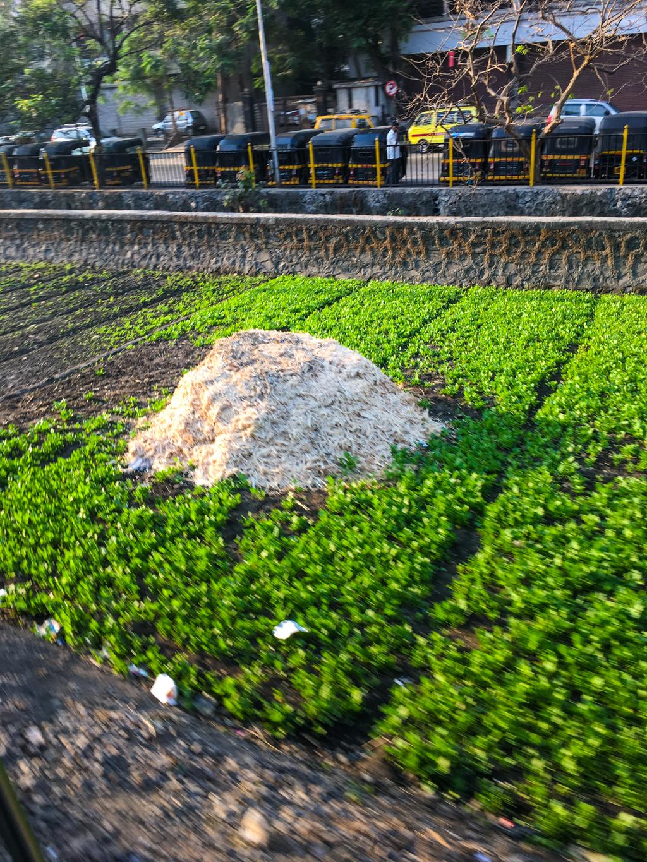 Farms along Mumbai's Railway Track