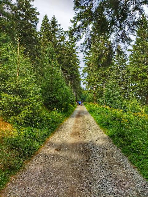 wejście na Orlicę, trasa, ścieżka, Zieleniec i jego atuty