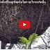 เมื่อมนุษย์บุกรุกรังผึ้งที่ใหญ่ที่สุดในโลก อะไรจะเกิดขึ้น (มีคลิป)