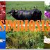 Simbiosis (Symbiosis), Pengertian, Bentuk - Bentuk dan Contoh Simbiosis.