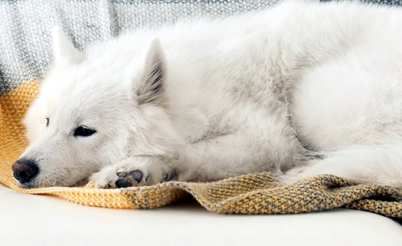 Experts Say That Your Pet Can't Catch or Spread Coronavirus