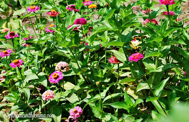 flowers, farming, gardening, athomewithjemma