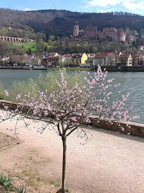 Heidelberger Schloss im Frühling