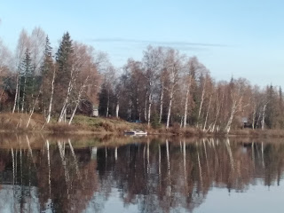 Reflections of birch along lake shore