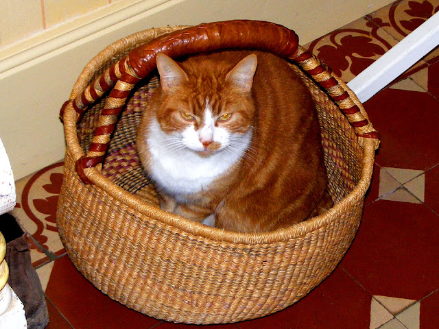Ginger cat in a basket.  Indre et Loire, France. Photographed by Susan Walter. Tour the Loire Valley with a classic car and a private guide.