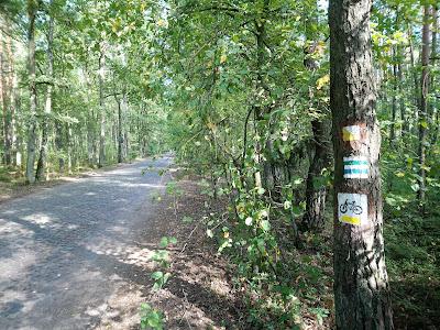 Droga palmirska w kierunku polany turystycznej i dalej Truskawia