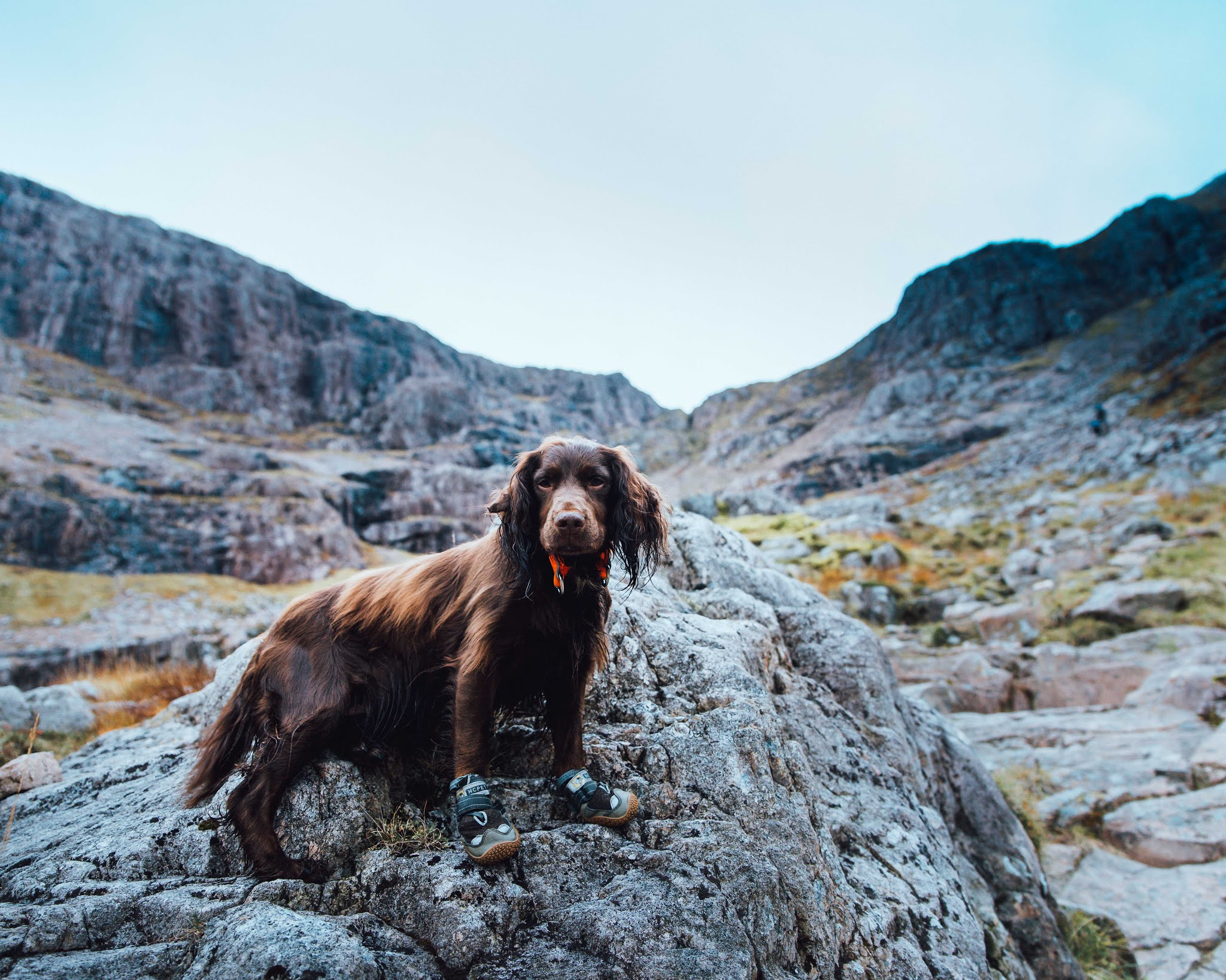 Best Collar for Hiking Dogs - Non-stop Hunting Dog Safety Collar Review liquid grain