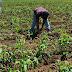 CONTINGENCIA POR COVID19 Y CRISIS ECONÓMICA IMPACTARÁ PRODUCCIÓN DE AGROALIMENTOS, EMPLEO Y SALUD DE CAMPESINOS