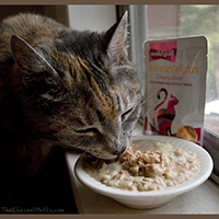 Solid Gold Holistic Delights Creamy Bisque Cat Food review