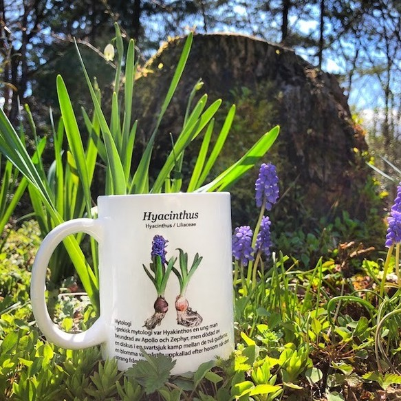 Let's have a teatime in your garden when Hyacinth has sprung.