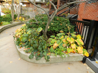 Garden District Toronto Fall Cleanup Before by Paul Jung Gardening Services--a Toronto Gardening Services Company