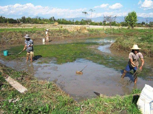 Pembuatan dan Persiapan Kolam Ikan Nila