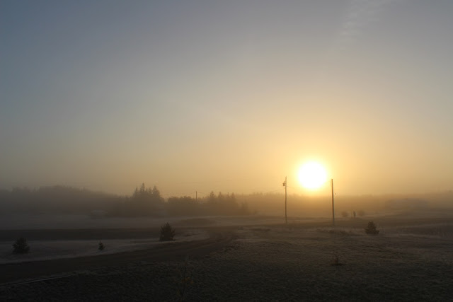 sunrise on a foggy, frosty morning