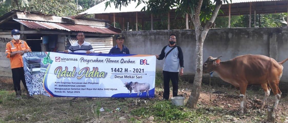 PT.BSL Serahkan Puluhan Hewan Qurban Pada Masyarakat