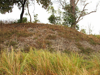 Heritage-listed cockle shell mound near Weipa