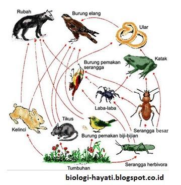 Jaring-jaring Makanan pada Ekosistem Darat