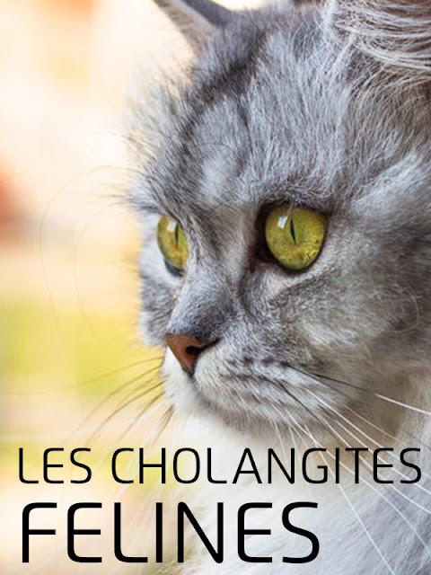 Les cholangites félines - WWW.VETBOOKSTORE.COM