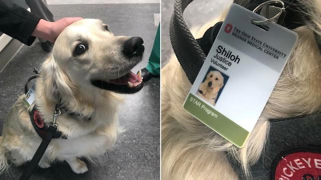 Собаку приняли на работу в больницу для поднятия настроения пациентам