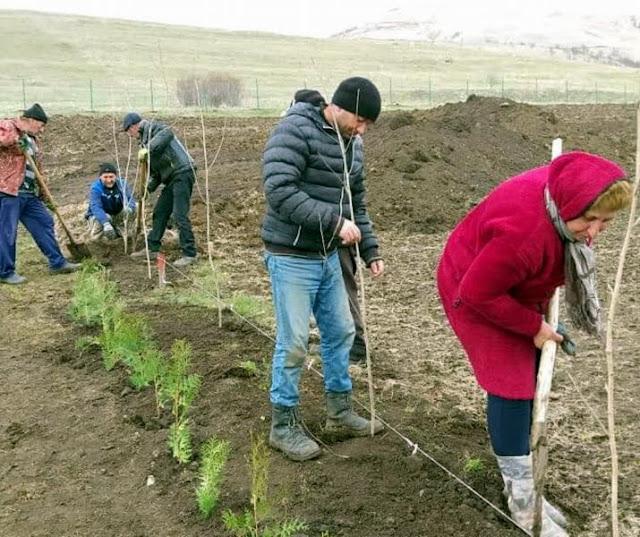 Desocupados Armenia plantan sauces