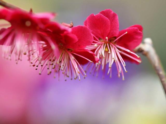 اجمل صور ورد و خلفيات ورود جميلة جدا HD | اجمل بوكيه ورد احمر