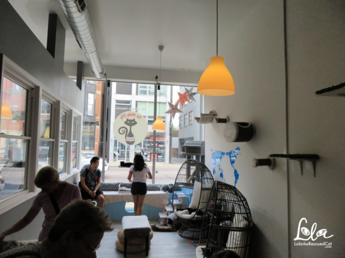 cat cafes|the windy kitty|chicago