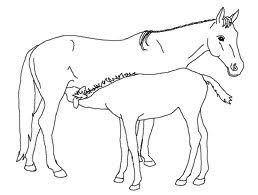 Immagini di cavalli da colorare for Immagini di cavalli da disegnare