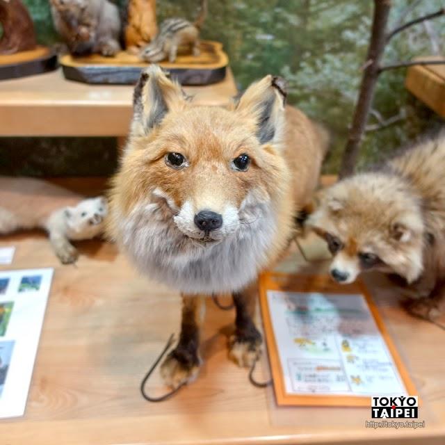 【層雲峽遊客服務中心】認識大雪山國立公園 溫暖木質空間展示動植物標本