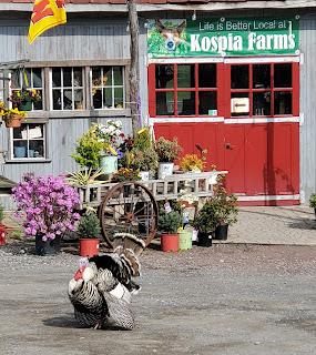 Kospia Farms Turkey