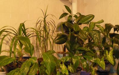 атмосфера для комнатных растений