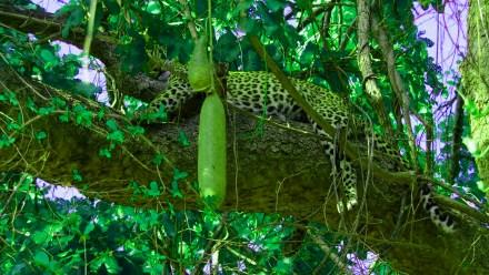 Tarzan dzsungeltörténetek vélemény