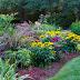 Waspada dengan 7 Hama Tanaman Ini, Jika Tak Ingin Kebunmu Rusak!