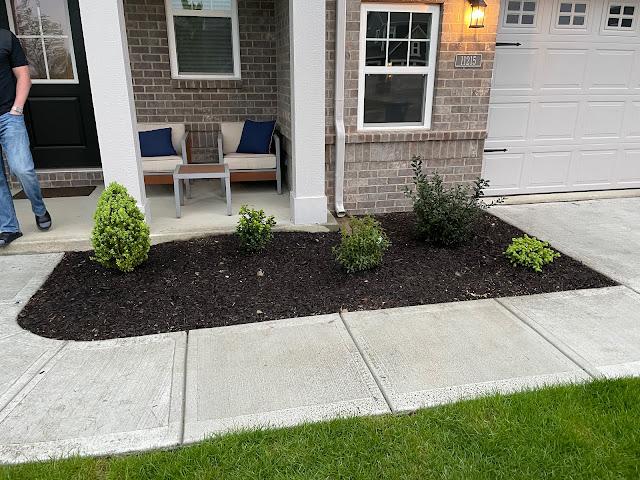 broadleaf evergreen landscaping plants