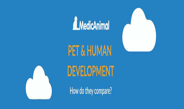 How Do They Compare Animals and Human Development #infographic