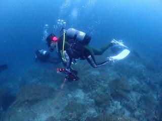 2021年7月19日の柏島ダイビング