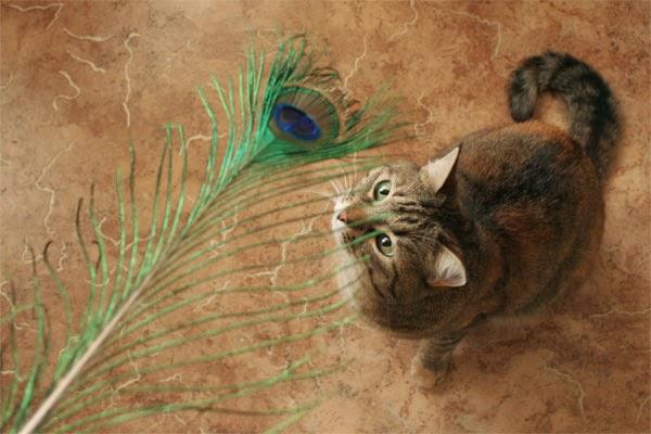 Перо павлина - игрушка для кошки