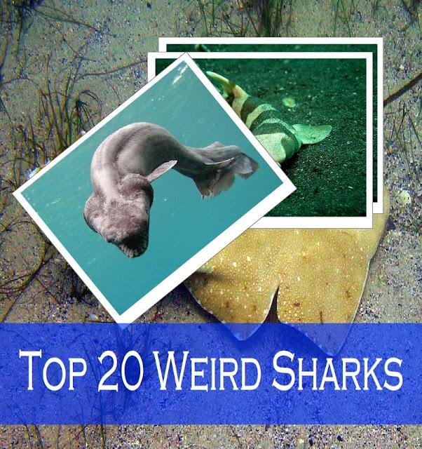 weird sharks