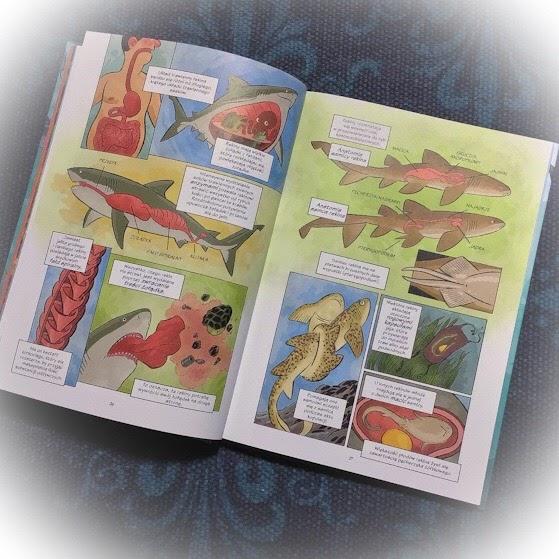 """""""Rekiny. Najlepsi myśliwi w przyrodzie"""" Joe Flood, Naukomiks, Nasza Księgarnia"""