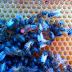 طريقة ايجاد ملكة النحل بسرعة  داخل الخلية