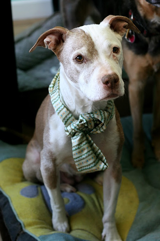 3 Signs Your Dog Loves Wearing Scarves