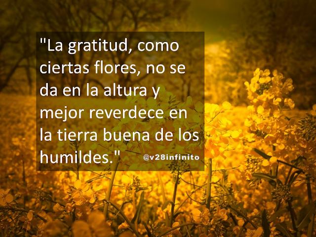 La gratitud, como ciertas  flores