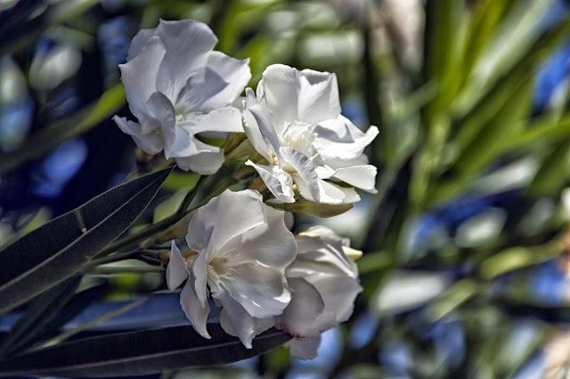 Foto de ramillete de cuatro flores blancas