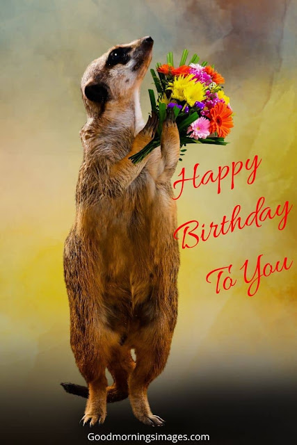 happy birthday in bengali in english