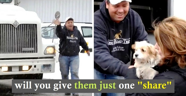 Man Rescues Unwanted Dogs From Kill List & Takes Road Trips To Find Them Homes